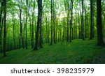sunlight in the green forest ... | Shutterstock . vector #398235979