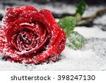 Stock photo red rose on snow background 398247130