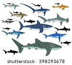 shark | Shutterstock .eps vector #398293678