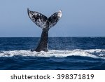 a humpback whale  megaptera... | Shutterstock . vector #398371819