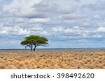 classical african landscape.... | Shutterstock . vector #398492620