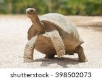 Stock photo giant grey tortoise standing on tropical island 398502073