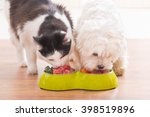 Stock photo little dog maltese and black and white cat eating natural organic food from a bowl at home 398519896