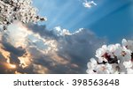 Small photo of blossoming branch of a cherry flower on background of sunset