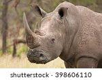 white rhinoceros  ceratotherium ... | Shutterstock . vector #398606110