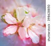 cherry blossom   Shutterstock . vector #398628850