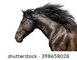 Black Stallion With Long Mane...