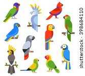 Cartoon Parrots Set Wild Birds...