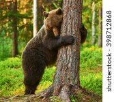 brown bear very tired leans... | Shutterstock . vector #398712868