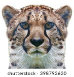 Cheetah Portrait Mirrored And...