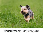 Stock photo happy dog running on green grass 398849080