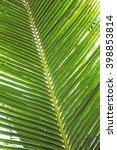 Palm Tree  Palm Branch.