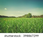 Summer Field With Long Green...