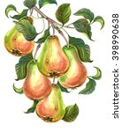 Group Of Pears With Leaves On ...