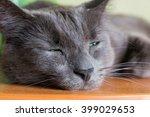 the green eyed black cat lies... | Shutterstock . vector #399029653