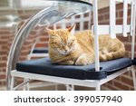 young cat sleeping  on white... | Shutterstock . vector #399057940