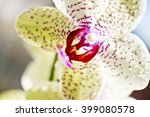 Yellow Orchid  Flower  In...