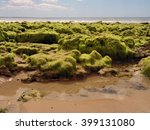 Small photo of Algal on rocks in Portugal