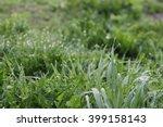 sparkling drops of morning dew... | Shutterstock . vector #399158143