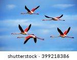 Flying Flock Of Nice Pink Big...