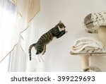 Stock photo jumping cat better quality 399229693