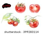 Tomatoes Watercolor...