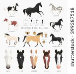 Clip Art Illustrations Of Hors...