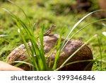 on the rock | Shutterstock . vector #399346846
