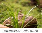 small lizard | Shutterstock . vector #399346873