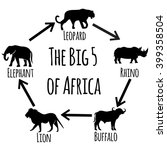 the big five of africa  ...