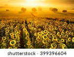 field of blooming sunflowers on ... | Shutterstock . vector #399396604