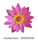 Stock photo lotus flower isolated on white background 399405298