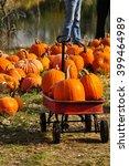 gathering pumpkins in a red... | Shutterstock . vector #399464989
