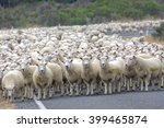 A Herd Merino Sheep On The Roa...