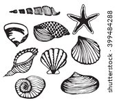 sea shells vector monochrome... | Shutterstock .eps vector #399484288