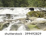 large male black bear searches... | Shutterstock . vector #399492829