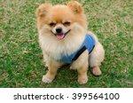 Stock photo closeup of a pomeranian dog sitting on grass 399564100