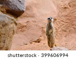 close up of attentive suricate... | Shutterstock . vector #399606994