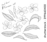 white plumeria  big set  vector ... | Shutterstock .eps vector #399660400