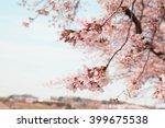 Sakura Of Saitama City Minuma...