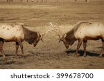 Small photo of North American Elk