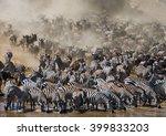 Big Herd Of Wildebeest Is About ...