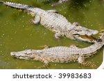 crocodile   Shutterstock . vector #39983683