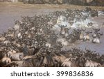 wildebeests are crossing mara... | Shutterstock . vector #399836836