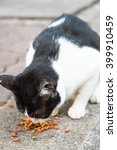 young cat is eating food from a ... | Shutterstock . vector #399910459