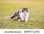 Stock photo persian kittens white color 399971293
