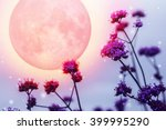 Purple Flowers On Full Moon...