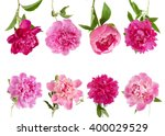 peony flowers set isolated on...   Shutterstock . vector #400029529