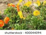 iceland poppy | Shutterstock . vector #400044094