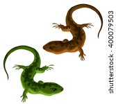 Green and brown lizard isolated on white background. Vector illustration.
